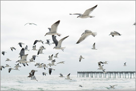 Image Source - Flock of seagulls flying, Destin, Gulf of Mexico, USA