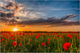Achim Thomae - Field of Poppies - Bavaria