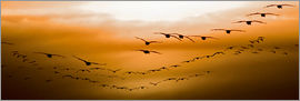 Chad Coombs - Geese flying into the sunset