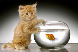 Greg Cuddiford - Ginger cat and fishbowl