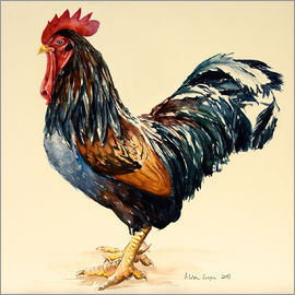 Alison Cooper - George's Cockerel, 2007
