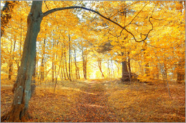 goldener Herbstwald