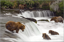 Chris Miller - Grizzly im Katmai Nationalpark