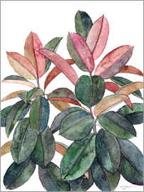 Micklyn Le Feuvre - Rubber Plant