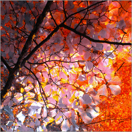 blackpool - Herbstbaum Abstrakt I