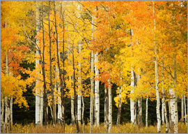 Ron Dahlquist - Herbstwald am Buffalo Pass