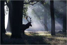 Alex Saberi - Stag in the morning light