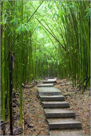 Jim Goldstein - Wooden path through a bamboo forest
