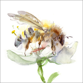 Verbrugge Watercolor - honey bee