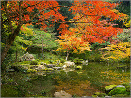 Jan Christopher Becke - Japanese garden in autumn with red maple tree