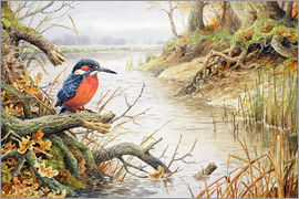 Carl Donner - Kingfisher