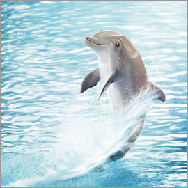 Photoplace Creative - Kleiner Delphin