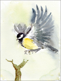Verbrugge Watercolor - Kohlmeise, fliegender Vogel