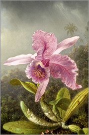 Martin Johnson Heade - Kolibri und Orchidee (Detail)