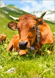 Cow with bell on mountain pasture