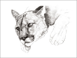 Ashley Verkamp - Lauernder Puma, Studie