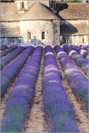 Matteo Colombo - Lavender field and famous Senanque abbey in Provence, France