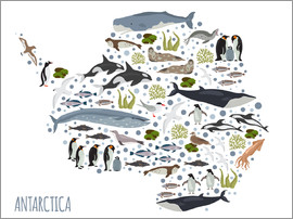 Kidz Collection - Critters of the Antarctic
