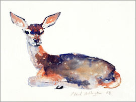 Mark Adlington - Lying deer