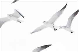 Image Source - Low angle view of flock of seagulls flying