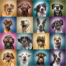 Manuela Kulpa - Funny (Dog) Faces