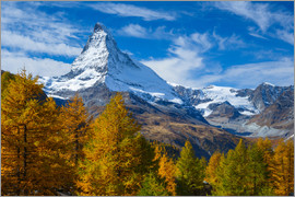 Patrick Frischknecht - Matterhorn and larch tree forest in autumn, Valais, Swiss Alps, Switzerland, Europe