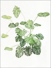 Jennifer McLennan - Monstera