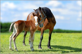 Mother Love - mare with foal
