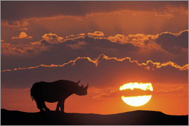 Jim Zuckerman - Africa, Kenya, Masai Mara Game Reserve. Composite of white rhino silhouette and sunset.
