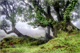 Circumnavigation - Fog within the Laurel forest, Madeira, Portugal