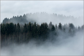 Sebastian Jakob - Fog in the forest