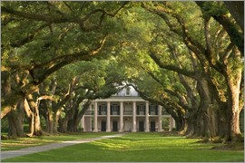 Wendy Kaveney - Oak Alley Plantation with a canopy of ancient oaks