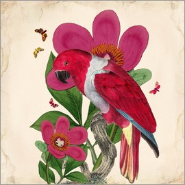 Mandy Reinmuth - Oh My Parrot VI