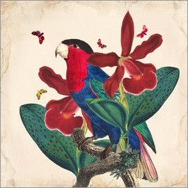 Mandy Reinmuth - Oh My Parrot VII