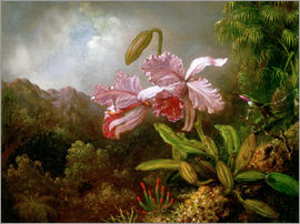 Martin Johnson Heade - Orchidee in einem Dschungel