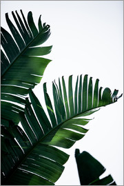 Mareike Böhmer Photography - Palm Leaves 16