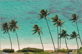 Markus Ulrich - Palm Trees in front of the turquoise Ocean