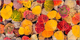 Don Paulson - Aspen leaves in a pool