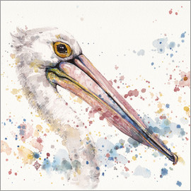 Sillier Than Sally - Pelicans About