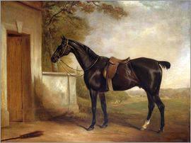 John E. Ferneley - Portrait of Buckle, First Lord Chesham's Hunter, 1836