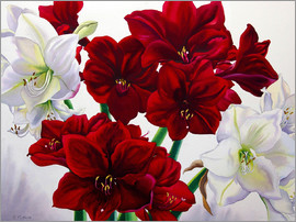 Christopher Ryland - Red and White Amaryllis, 2008