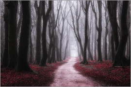 tvurk photography - Red Reverie