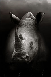 Johan Swanepoel - Rhinoceros portrait close-up