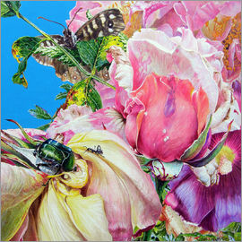 John Hurford - Rosechafer