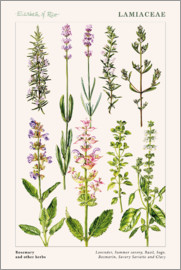 Elizabeth Rice - Rosemary and other herbs