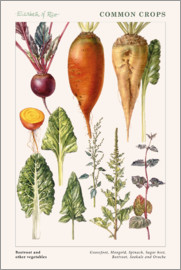 Elizabeth Rice - Beetroot and other vegetables