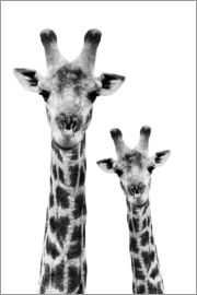 Philippe HUGONNARD - Safari Profile Collection - Portrait of Giraffe and Baby White Edition IV