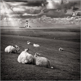 Carsten Meyerdierks - Talking Sheep