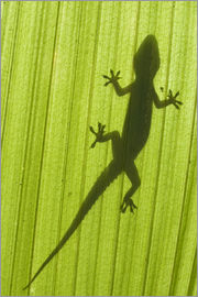 Scubazoo - Silhouette of a gecko on a palm frond