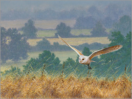 Ikon Images - Barn owl in watercolor and colored pencil